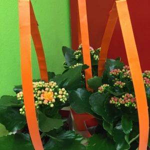 téli virágok